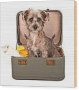 Terrier Dog In Suitcase Wood Print