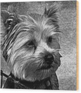 Terrier - Dog - Playing With Light Wood Print