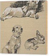 Terriers, 1930, Illustrations Wood Print