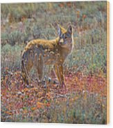 Teton Coyote Wood Print