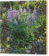 Teton Widflowers  Wood Print