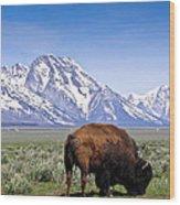Tetons Buffalo Range Wood Print