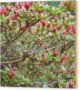 Tetragnathidae Web In Azalea - Cape Cod Ma Wood Print