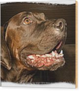 Tex The Dog Wood Print