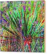 Texas Agave Pee Wee Plant Wood Print