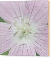 Texas Baby Blue Eyes Nemophila Phacelioides Wood Print