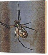 Texas Barn Spider In Web 2 Wood Print