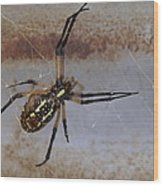 Texas Barn Spider In Web 3 Wood Print