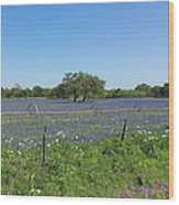Texas Blue Bonnets Wood Print by Shawn Marlow