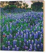 Texas Bluebonnet Field Wood Print