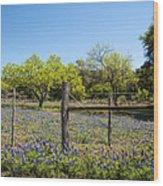 Texas Bluebonnet Lupine Pature Wood Print