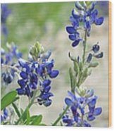 Texas Bluebonnets 01 Wood Print