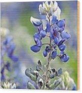 Texas Bluebonnets 04 Wood Print