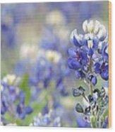 Texas Bluebonnets 05 Wood Print