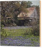 Texas Bluebonnets With Old Abandoned Shack Wood Print