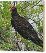 Texas Buzzard - Turkey Vulture Wood Print