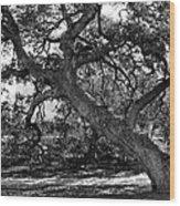 Texas Capitol Tree Wood Print