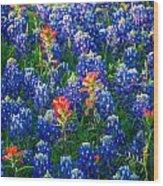 Texas Colors Wood Print
