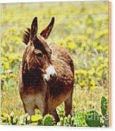 Texas Donkey In Yellow Cacti Wood Print