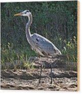 Texas Coastal Birds Wood Print