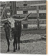 Texas Longhorn Black And White Wood Print