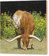 Texas Longhorn Cattle  Wood Print