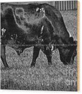 Texas Longhorn IIi Wood Print