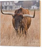 Texas Longhorn Wood Print