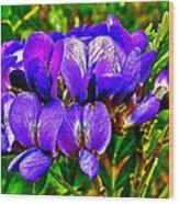 Texas Mountain Laurel Along Window Trail In Big Bend National Park-texas Wood Print