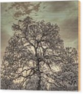 Texas Oak Tree Wood Print