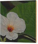 Texas Olive  Wood Print