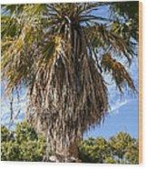 Texas Palm Wood Print