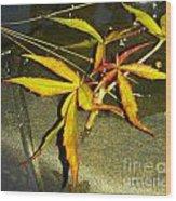 Texas Star Leaf Wood Print