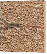 Texas Striped And Spotted Whiptail Lizard Wood Print