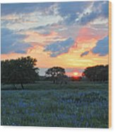 Texas Wildflower Sunset  Wood Print