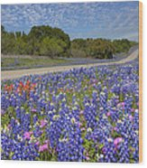 Texas Wildflowers Images - Bluebonnets 2 Wood Print