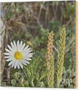 Texas Wildflowers V5 Wood Print