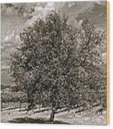 Texas Winery Tree And Vineyard Wood Print