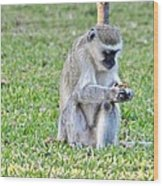 Texting Monkey Wood Print