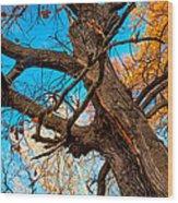 Texture Of The Bark. Old Oak Tree Wood Print