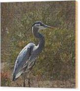 Textured Blue Heron Wood Print