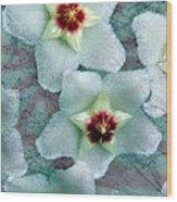 Textured Hoya Wood Print