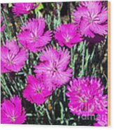 Textured Pink Daisies Wood Print