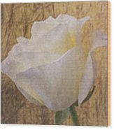 Textured Rose Wood Print