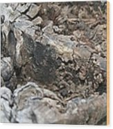 Textured Tree Stump Of Eucalyptus Tree  Wood Print