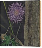 Thailand  Purple Wild Flowers Wood Print