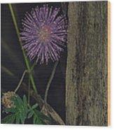 Thailand  Purple Wild Flowers Wood Print by David Longstreath