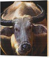 Thailand White Buffalo Wood Print by Arthit Somsakul