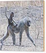 Thanks For The Ride Olive Baboon Wood Print