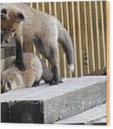 That's Not Helping - Two Fox Kits Wood Print